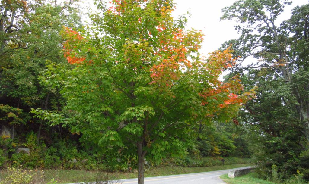 Herfstkleuren Skyline Drive rondreis Amerika