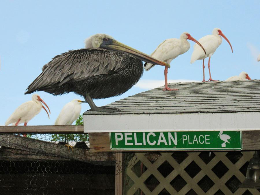 Rondreis door Amerika vogels Florida Keys