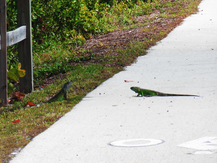 Rondreis in Amerika Florida Keys