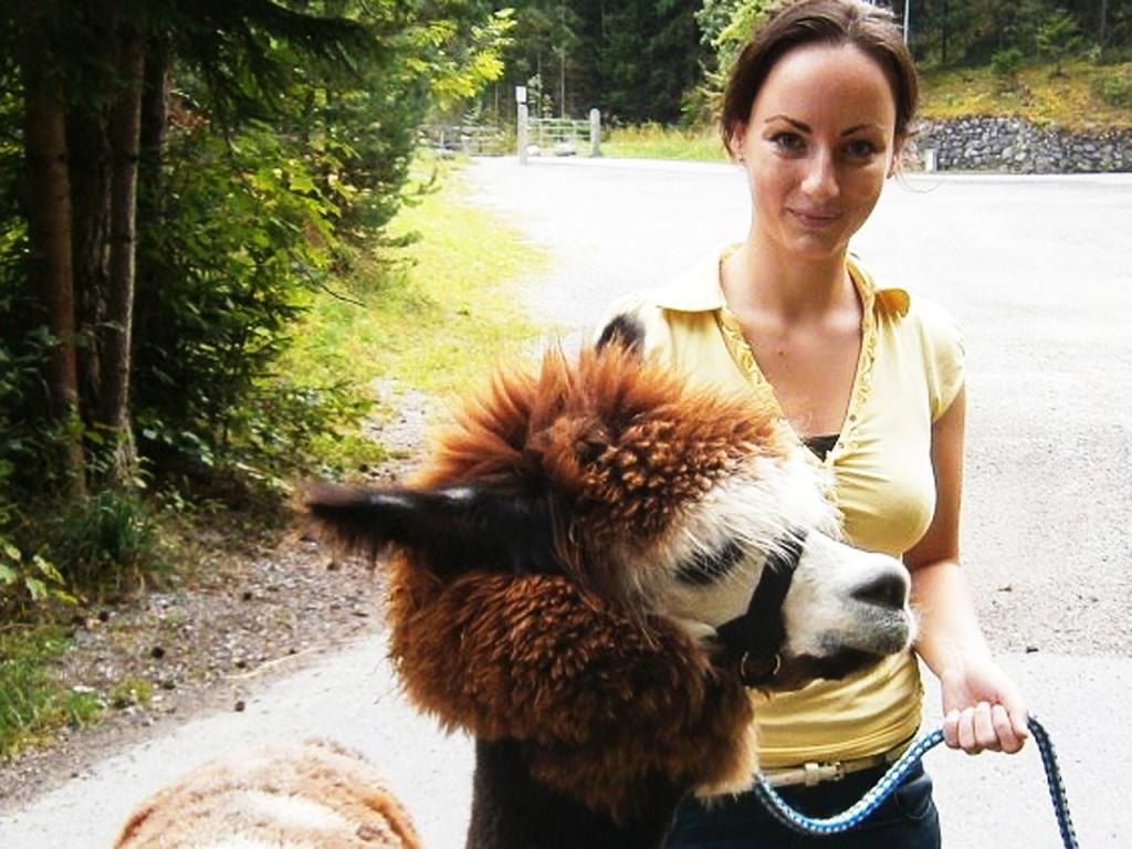 wandelen met alpaca's in Oostenrijk