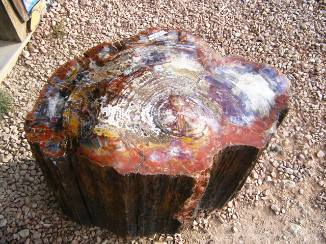 petrified-forest in amerika