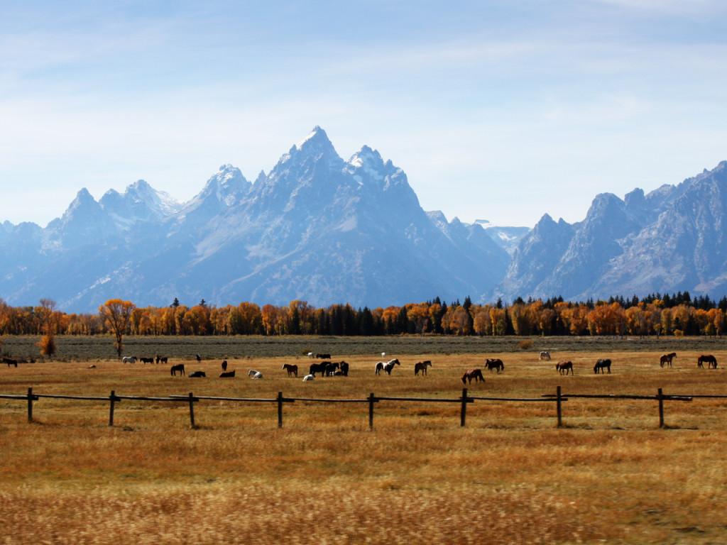 bezienswaardigheden-grand-teton-elk-ranch
