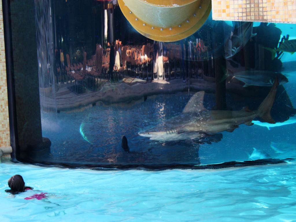 zwembad-las-vegas-met-haaien-amerika-reisblog