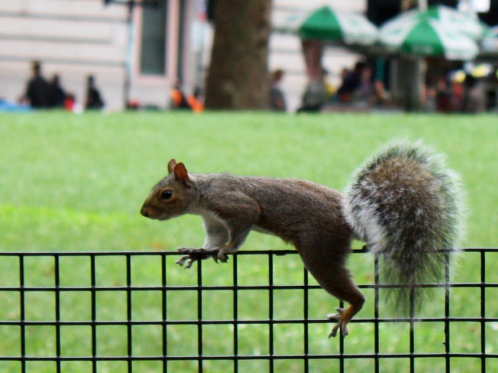 Amerika-blog-reizen-Verenigde-Staten-New-York-eekhoorn