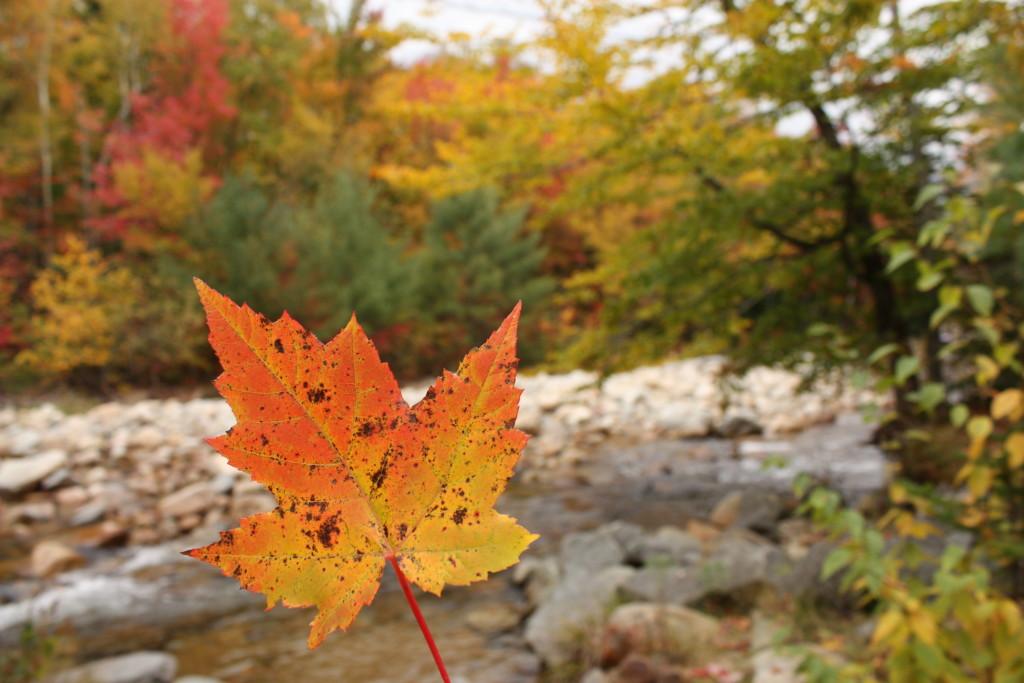 Hersftkleuren in New England Amerika reis
