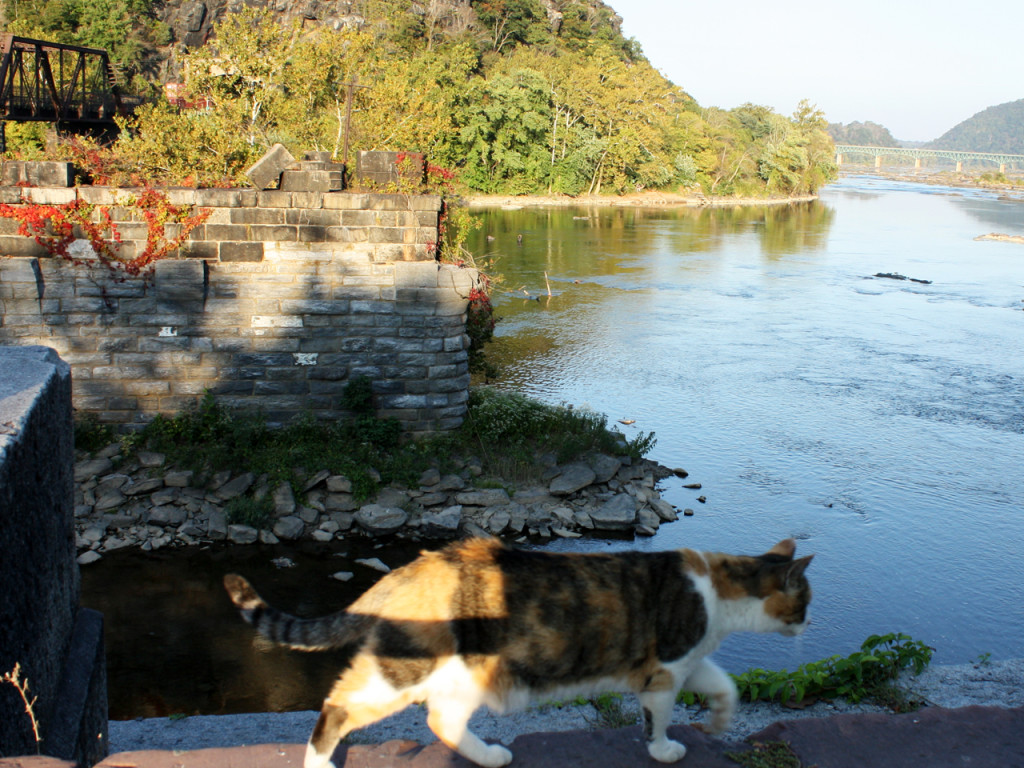 Harpers-Ferry-cat-and-view-railroad