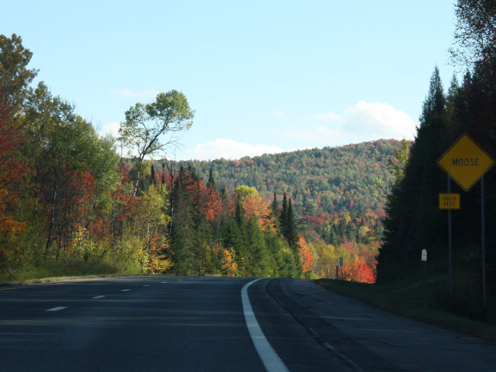 herfstkleuren-in-Amerika-vanuit-Canada-Moose-road-sign
