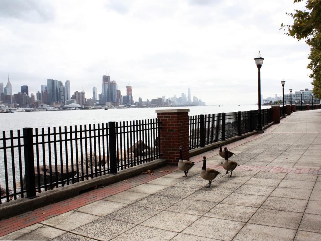Uitzicht-skyline-New-York