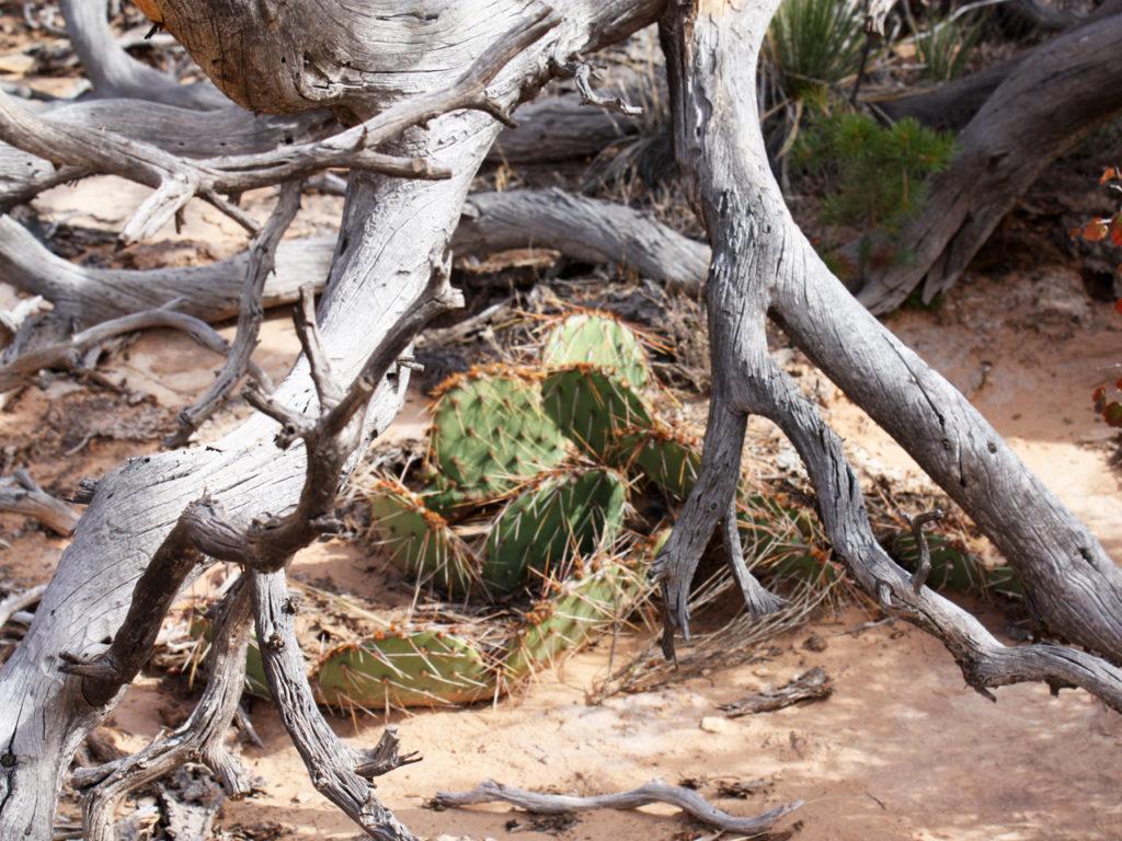 Natuur-Canyonlands-National-park-Amerika