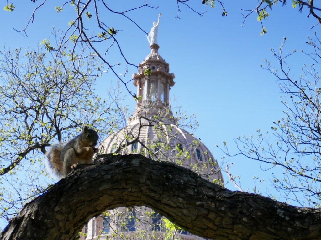 Eekhoorn-in-Austin