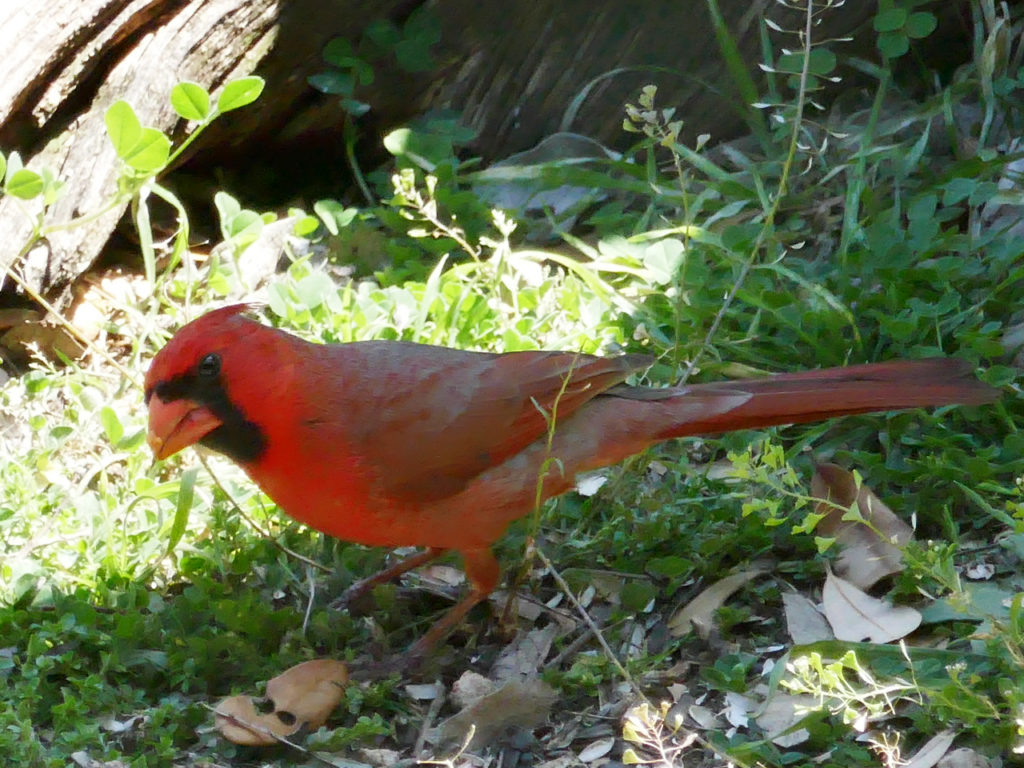 Birds-Pedernales-Park