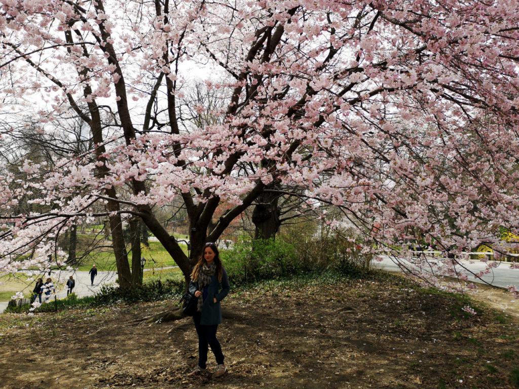 Lente-in-New-York-Cherry-blossom-Spring