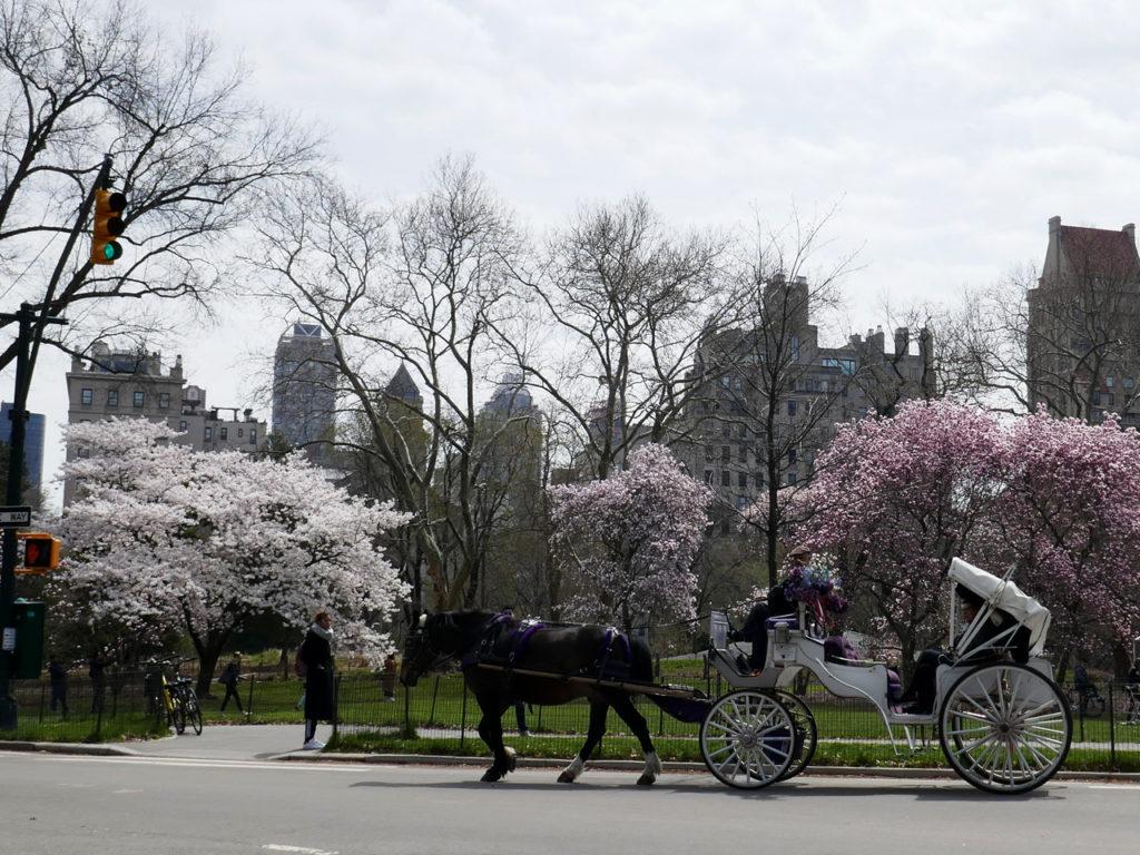 Lente-in-New-York-paard-en-wagen