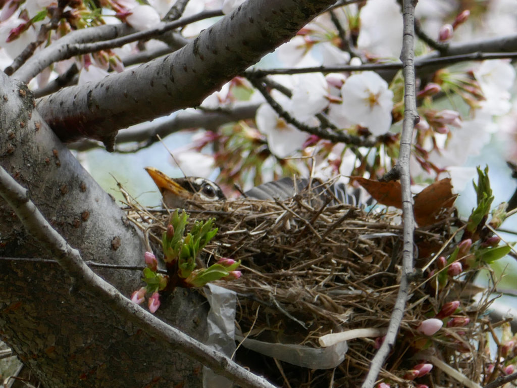 Lente-in-New-York-vogel-Spring-in-New-York-bird