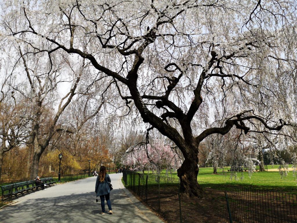 Lente-in-New-York-wandeling-in-Central-Paek