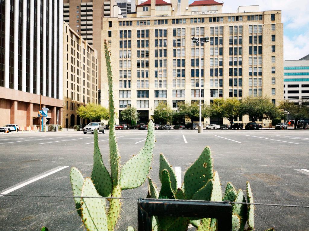 cactus-in-Dallas