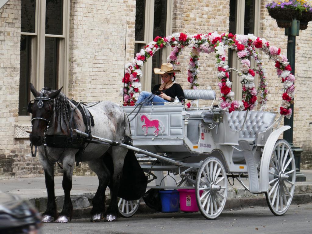 Horse-carriage-San-Antonio