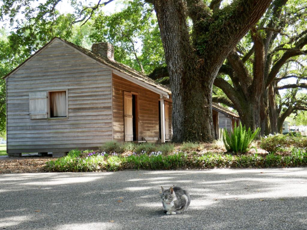 Oak-Alley-plantation-Cat
