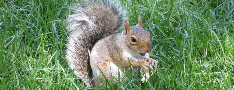 Central-Park-breakfast-Squirrel