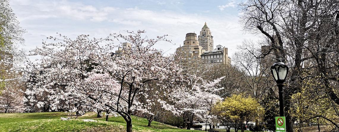 New york dating blog